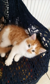 3 boys are looking for new homes.