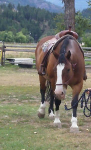 Great trail horse