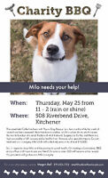 Charity BBQ to fundraise for Milo--Pound Dog Rescue