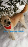 pension pour chiens sans cages home boarding for your dog sittin