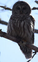 Hampton Nature Club - March 7th Meeting - Owls of New Brunswick