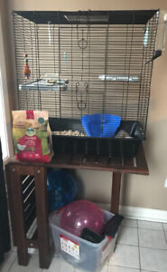 Rats and accessories for sale
