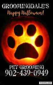 Pet Grooming ~Dogs & Cats ~