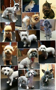 Professional full service grooming for all dog breeds and cats