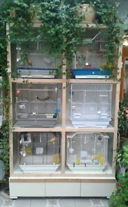 Birds & Cage display Unit