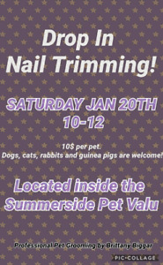 Drop in Nail Trimming on Saturdays  and Grooming Appointments Av