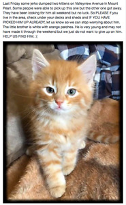 Have you seen this kitten's brother on Valleyview in Mount Pearl