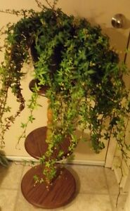Large english ivy - comes with plant stand or table.
