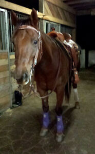 7yr. All 'Rounder Mare