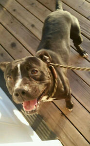 Reggie is Looking for a Foster or Foster to Adopt Home