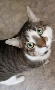 Three Tabby Brothers need loving forever home
