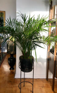 Beautiful and Rare Houseplants for Sale