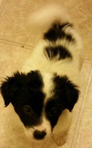 Adorable small mixed pups