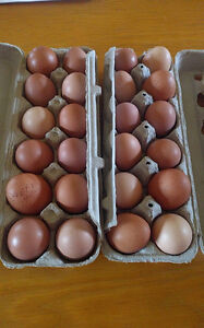 Eggs organic not certified, farm fresh per dozen