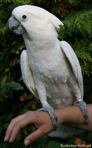 NUTHOUSE AVIARY AND PARROT RESCUE SERVICES AVAILABLE