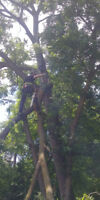 24/7 EMERGENCY TREE SERVICE / REMOVAL / PRUNING / STUMP GRINDING