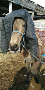 Mare for sale900pbo