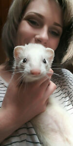 LOST FERRET (Tilly)