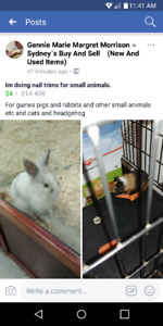 Im doing nail trims for all small animals
