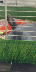 Rabbits for rehome