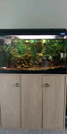 Fish Tank Fluval 120 with stand and accessories.