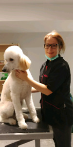 Dog grooming special