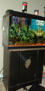 20 gl fish tank with stand
