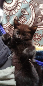Adorable kittens searching for their loving homes