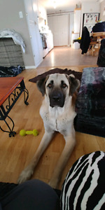 Looking for open concept or in home dog boarding