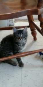 Selling kitten moving and cant take him