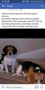 Lost Beagle South West Barrie