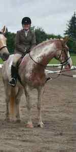 Horse items for sale Kitchener / Waterloo Kitchener Area image 4