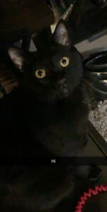 2, 1 year old kittens for sale