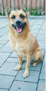 Missing Dog near Morningside and old finch