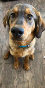 6 month old dog for rehoming