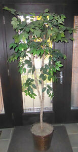6ft fake ficus tree, good condition