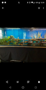 135g fishtank, comes with fish and turtles
