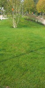 Fertigrasen - Rasen - Rollrasen - Günstige Lieferung möglich.