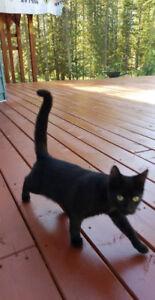 Lost Cat in NDG
