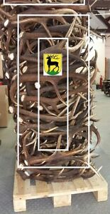 Fresh Shed Antlers (Bulk pricing 500lbs or more, or just pay mor