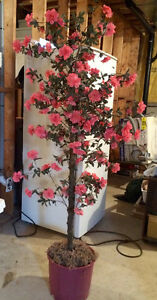 Artificial Tree with pink flowers