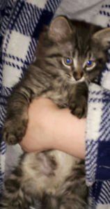 Free Kitten ready for a good home.