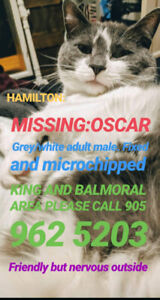 **LOST CAT** Adult male grey/white Hamilton king/Balmoral
