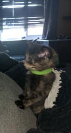 Stunning girl kitten