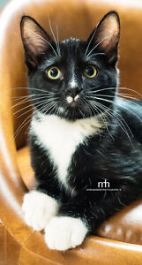 Greater Edmonton Animal Rescue Society - Alfie up for Adoption!