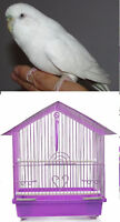 white budgie with cage