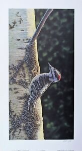 Nature Print - Birds - Woodpecker - Limited Edition Canadian Art