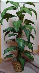 """Artificial plant. 50"""". Green leaves. Good condition."""