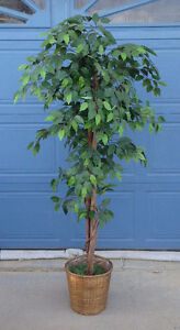 LARGE ARTIFICIAL FICUS PLANT