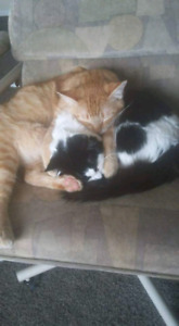 2 amazing cats need a new home